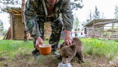 медвежонок пьет молоко